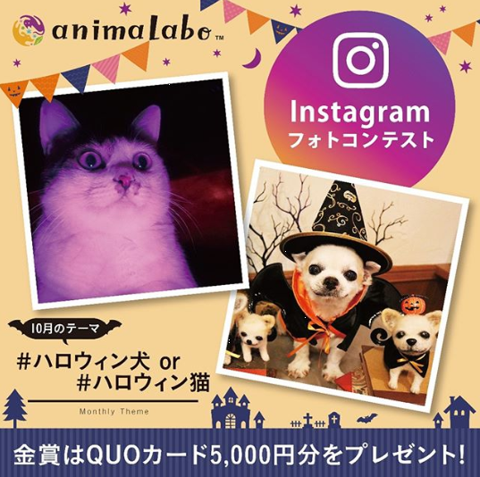 Halloween for Pets in Japan 2019