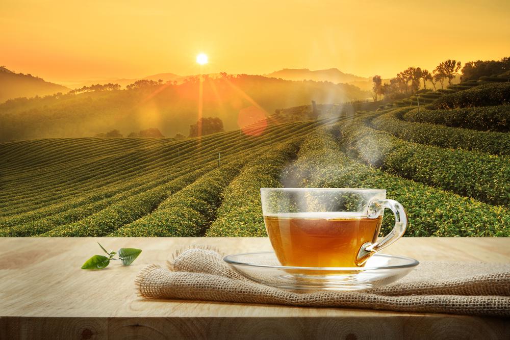 Tea Industry in Japan